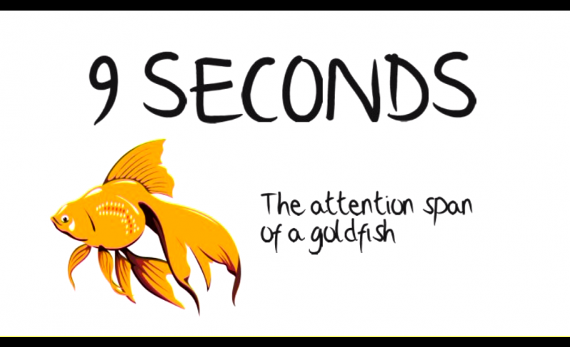 Goldfish-attention-span[1]